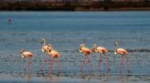 Ebro Delta natural park  Delta de l'Ebre