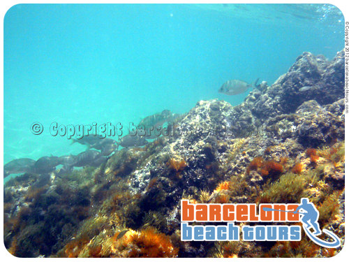 day_tour_beach_costabrava_snorkeling