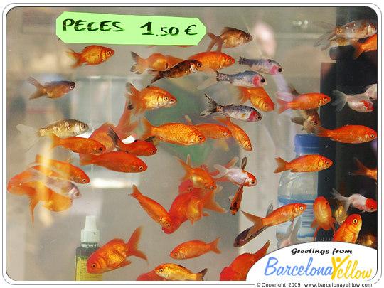 Fish tank La Rambla pet stall
