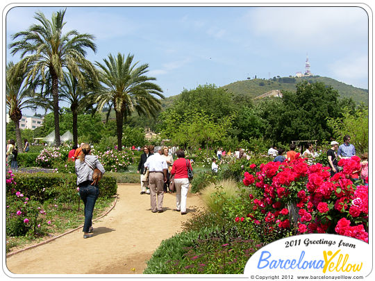Barcelona Rose Festival - Concurs Internacional de Roses Noves