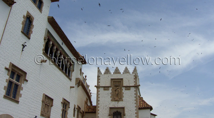sitges_swallows