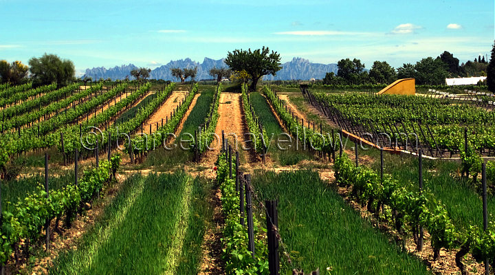 wine_regions_near_sitges