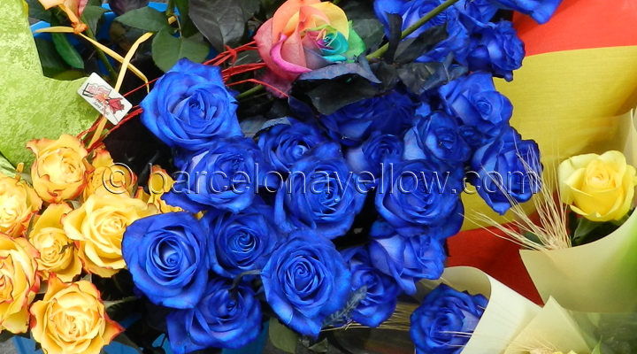 blue_roses_sant_jordi