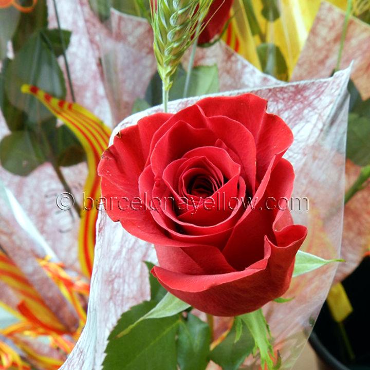 red_rose_sant_jordi_barcelona