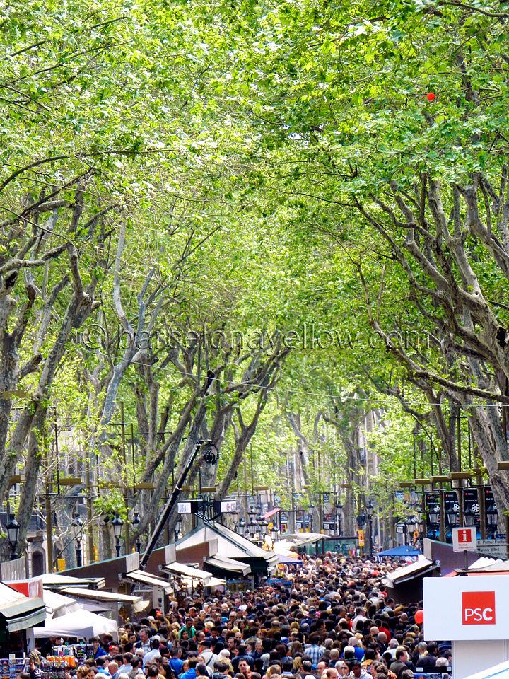 trees_rambla_sant_jordi