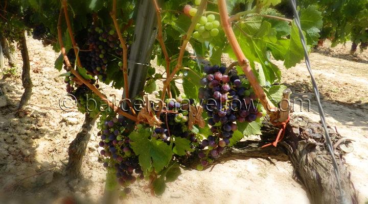 barcelona_wine_tours