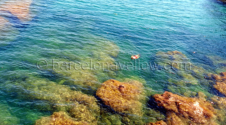 Snorkeling Costa Brava waters